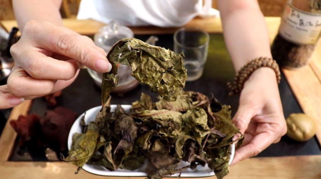 Lá trà Bancha sau khi chế biến xong